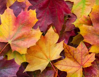 Fall Leaves Colors