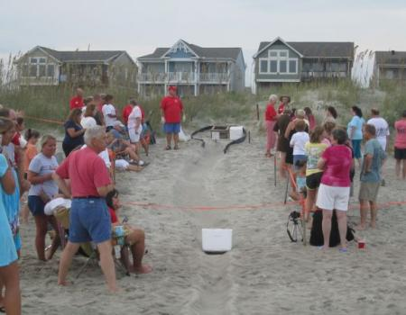 Holden Beach Turtle Crawl