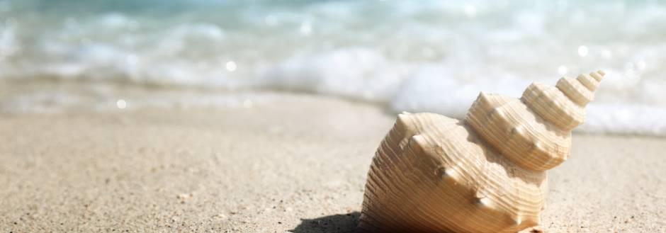 mini-conch-shell