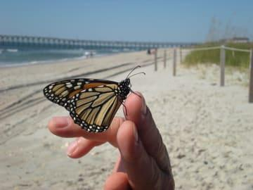 Beautiful Butterfly on someone's hand on Holden Beach