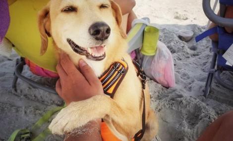 beach dog at holden beach