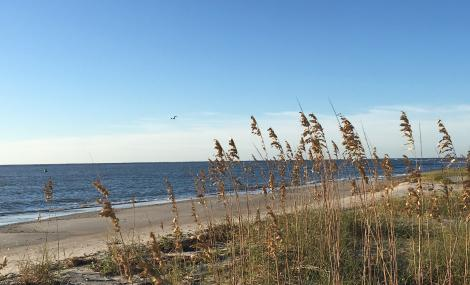 sea oats north carolina