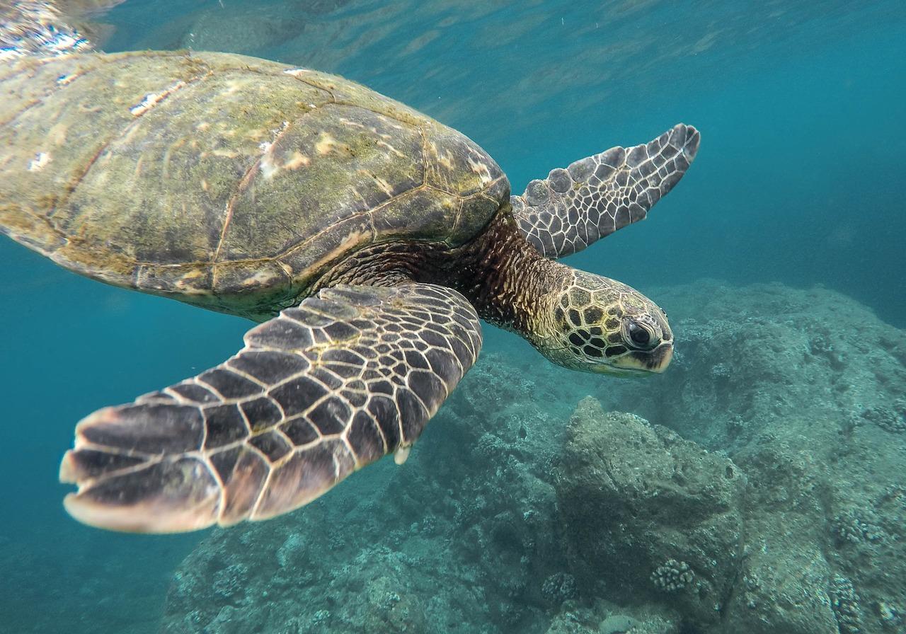 sea turtle holden beach