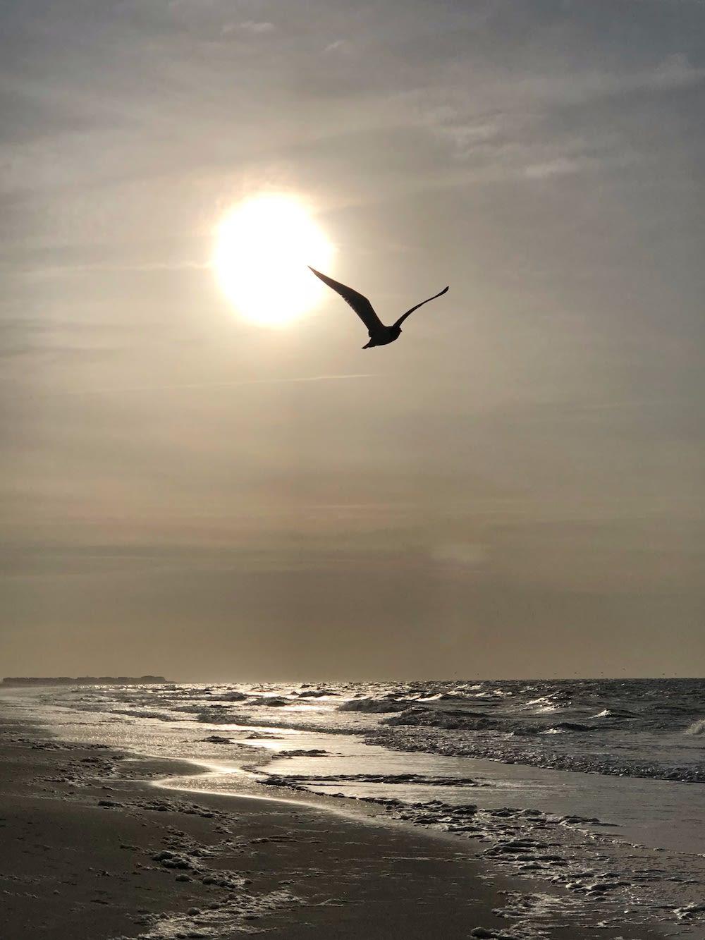 Bird Flying Over Holden Beach