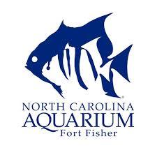 nc aquarium ft fisher