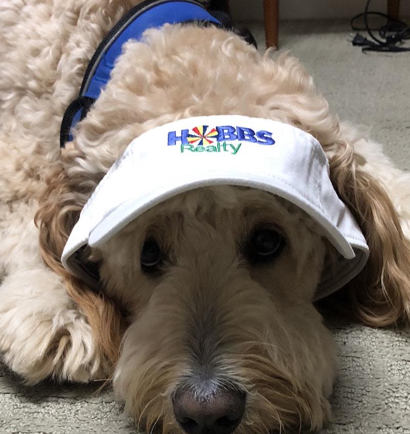 hobbs realty dog