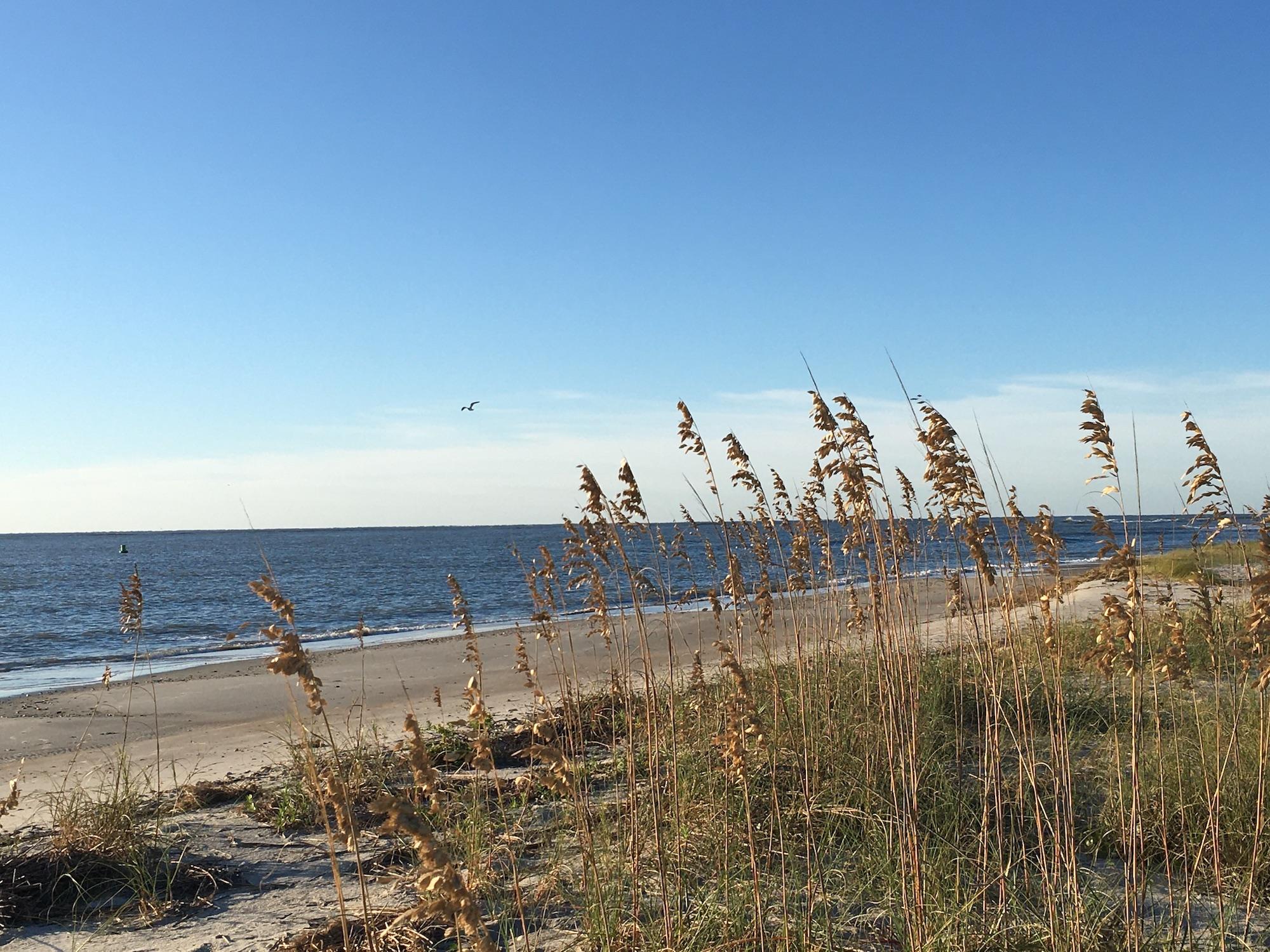 sea oats north carolina